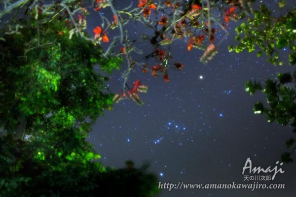 デイゴの花とオリオン座・石垣島の星空天の川次郎